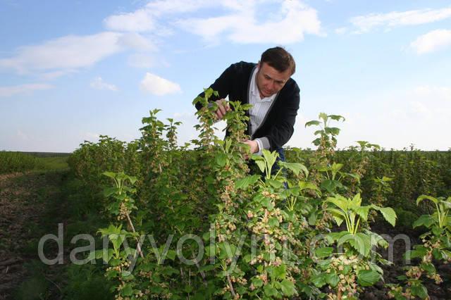 Захист рослин