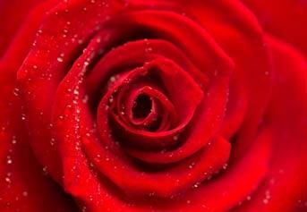 """Вафельна картинка  """"Квіти"""""""