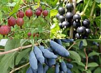 Особенности посадки ягодных культур в весенний период
