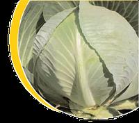 Семена капусты Структон F1, 2500 семян