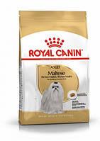 Royal Canin Maltese Adult (Роял Канин) - сухой корм для взрослых собак породы Мальтийская болонка 0,5 кг