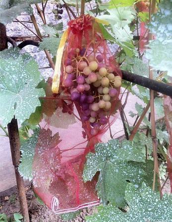 Сетка-мешок, защитная сетка от птиц для винограда 22х35 красные 50 шт нагрузка до 2кг, фото 2