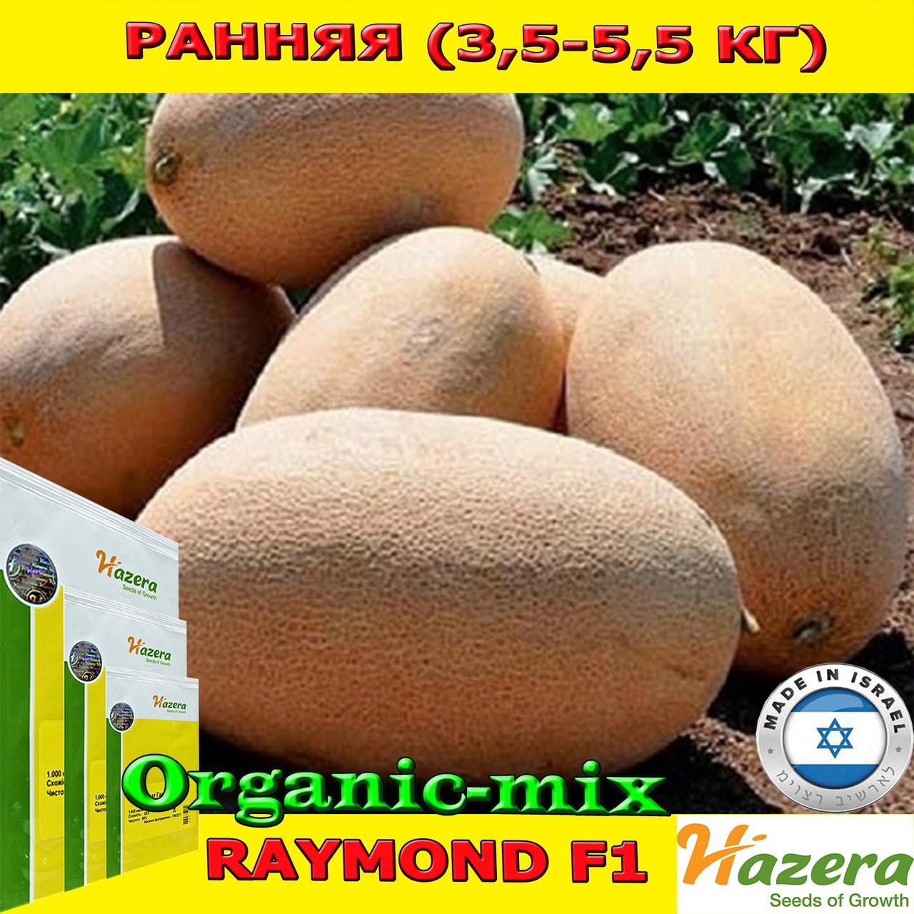 Семена, дыня РАЙМОНД F1 / RAYMOND F1 средне ранняя 5000 семян ТМ Hazera (Израиль)