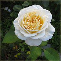 Мери Бери Роуз, фото 2