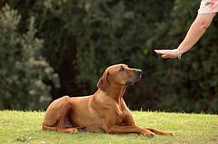 8 основних команд для собак: як навчити легко і швидко