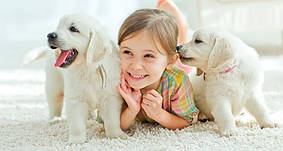 ТОП-10 самых дружелюбных пород собак