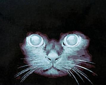 Картина по номерам 40×50 см. Mariposa Взгляд кошки (Q 1776)