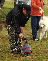 Дрессировка собак, услуги кинолога