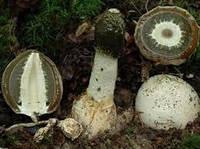 ИСПОВЕДЬ ПАЦИЕНТКИ Целительная сила гриба Веселка