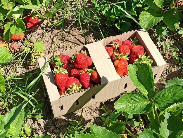Корзина для фруктов, фото 2