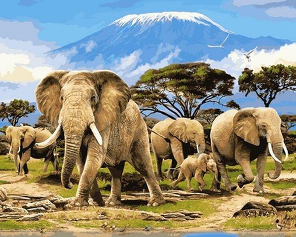Картина по номерам 40×50 см. Babylon Утро Килиманджаро Слоны (VP 622)