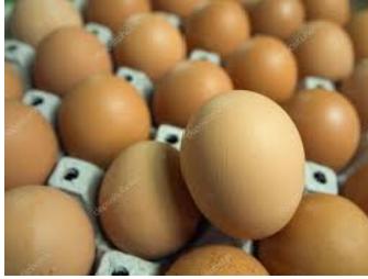 Яйце бройлера кобб500 звідтам молодиця