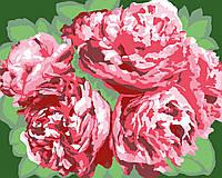 Картина по номерам Красные пионы (цветной холст) 40*50см Розпис по номерах