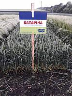 Озима пшениця Катаріна перша репродукція імпорт(1т)