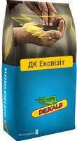 Семена озимого рапса ДК Эксквизит (ДК Ексквізіт)