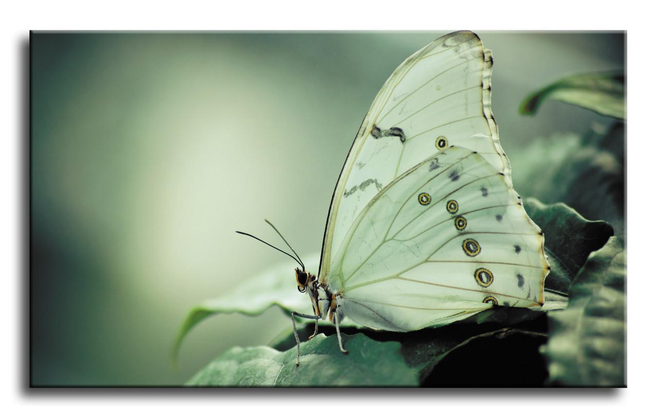 "Картина на полотні ""Метелик"""