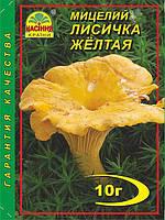 Міцелій Лисичка Жовта 10гр