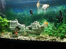 Изготовление, продажа, обслуживание аквариумов