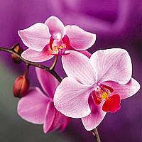 """Алмазная живопись. Набор алмазной вышивки """"Розовые орхидеи"""". Размер 30*30 см, 35 цветов."""