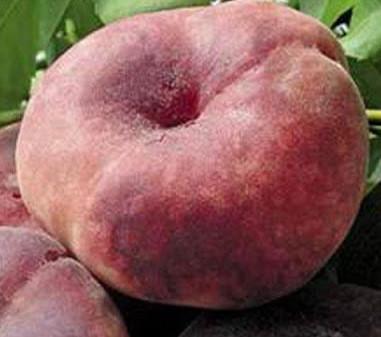 Саженцы персика инжирный Сатурн (однолетний)