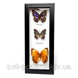 Бабочки под стеклом 16*38 QW-3