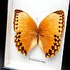 Бабочки под стеклом 16*38 QW-3, фото 2
