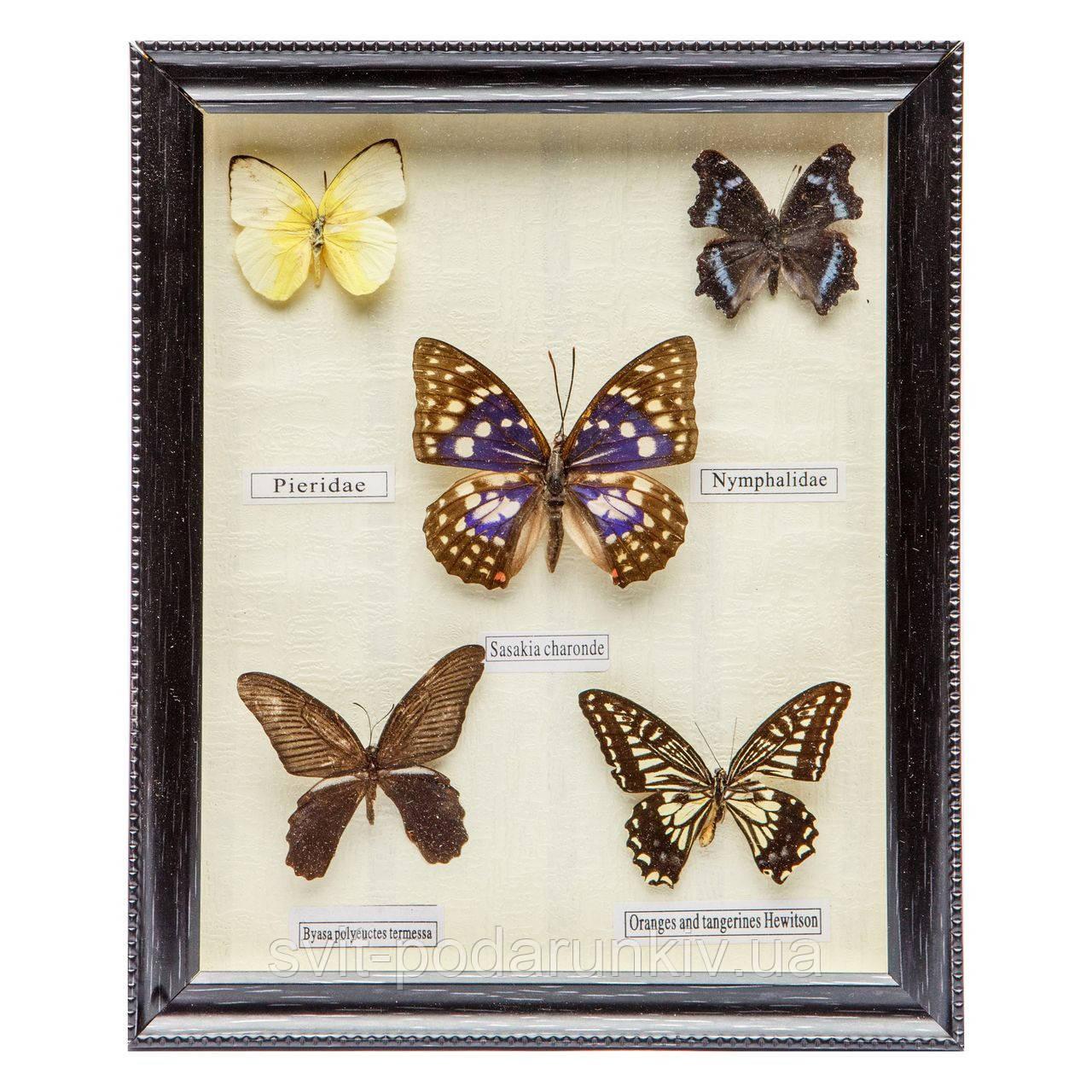 Картина бабочки под стеклом 23*28 QW-4