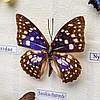 Картина бабочки под стеклом 23*28 QW-4, фото 2
