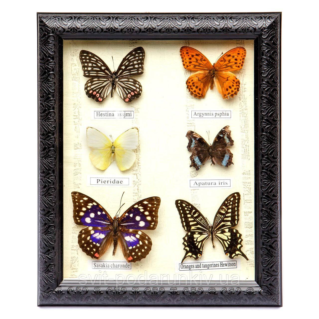 Картина бабочки под стеклом 24*29 QW-5