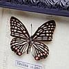 Картина бабочки под стеклом 24*29 QW-5, фото 3