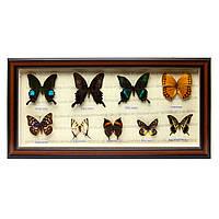 Картина бабочки под стеклом 59*30 QW-7