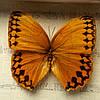 Картина бабочки под стеклом 59*30 QW-7, фото 3