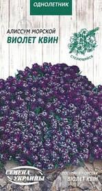 Семена Алиссум морской Виолет квин 0,1 г, Семена Украины