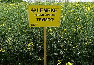 Гібрид озимого ріпаку Трумпф Лембке (NPZ-Lembke)