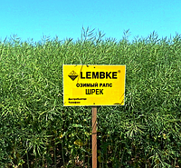 Семена озимого рапса Шрек Лембке