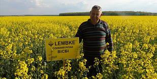 Насіння озимого ріпаку Вісбі Лембке (NPZ-Lembke)
