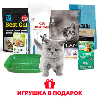 Набор для котенка Royal - игрушка в подарок