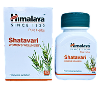 Шатавари экстракт, Shatavary - лечения заболеваний женских половых органов, укрепления женского здоровья, фото 1