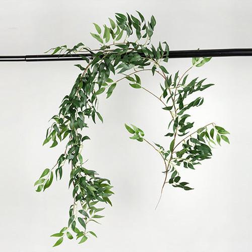 Лиана рускус  зеленый 170 см
