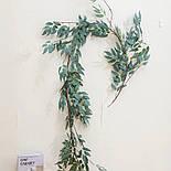 Лиана рускуса  оливка, фото 2