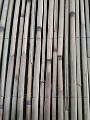 Камышовый забор прошитый леской 1,6 х 6 м