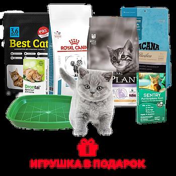 Набор для котенка ProPlan: 10 товаров первой необходимости и игрушка в подарок