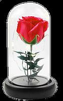 Роза в колбе с LED подсветкой UKC подарок ночник 16 см Красный (hub_axfV69557)
