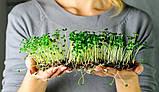 Набор для проращивания микрозелени Start 12 урожаев + семена ЧИА в подарок, фото 4