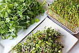 Набор для проращивания микрозелени Start 12 урожаев + семена ЧИА в подарок, фото 3