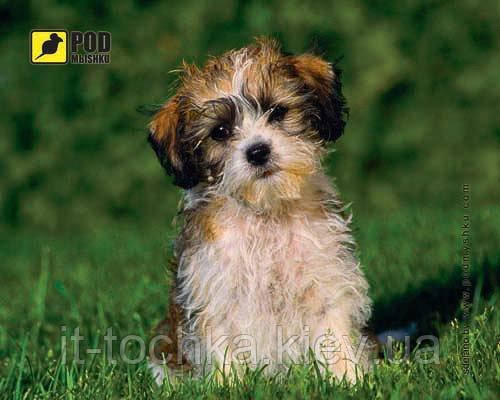 Коврик Лохматый щенок