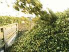 Силосоуборочный комбайн, кормоуборочный комбайн с роторной жаткой сплошного среза CHALLENGER  4, фото 2