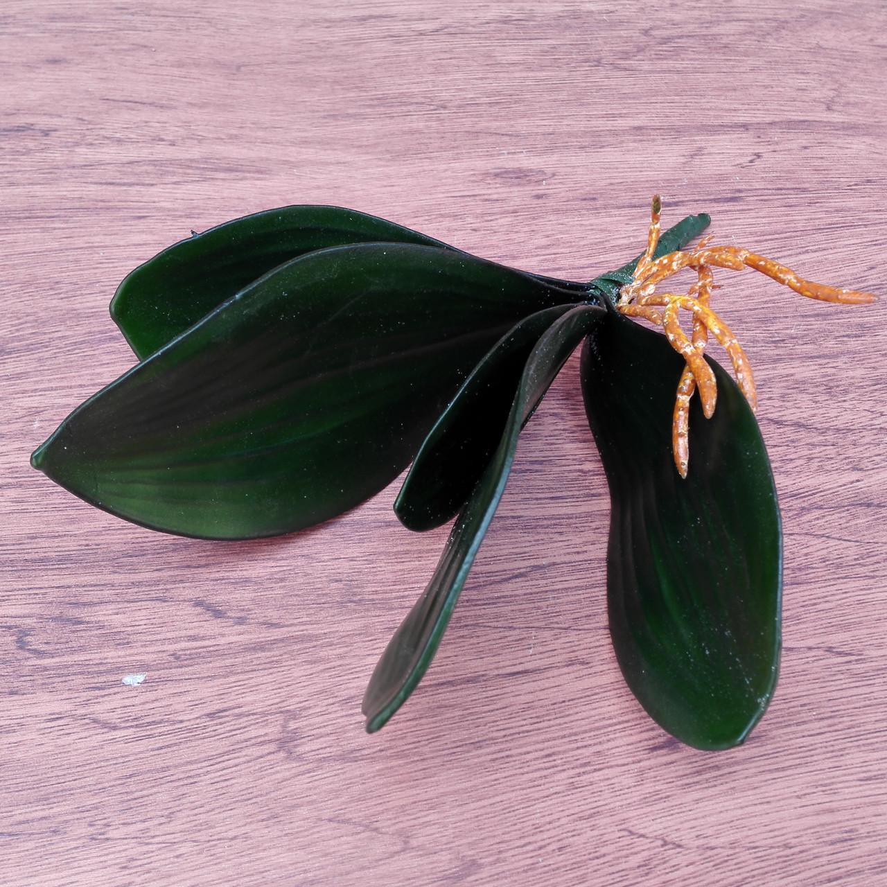 Листья с корнем орхидеи 26 см латекс большие