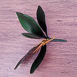 Листья с корнем орхидеи 24 см средние, фото 3