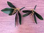 Листья с корнем орхидеи 24 см средние, фото 4